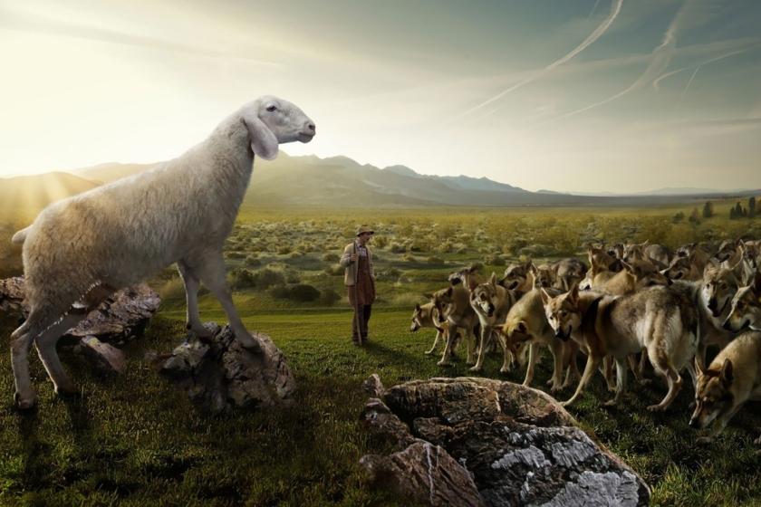 ovelha cães revolução